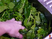 lavo gli spinaci e li sbollento