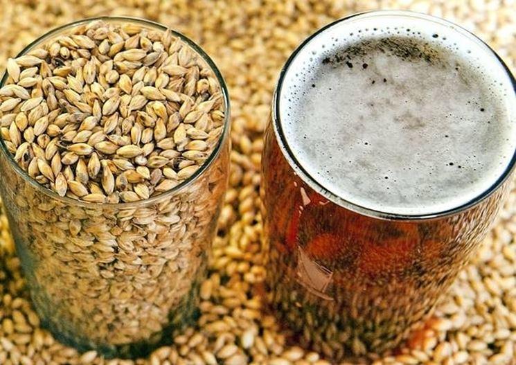 malto per birra