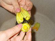 I fiori di zucca