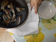 Filtra l acqua dei molluschi