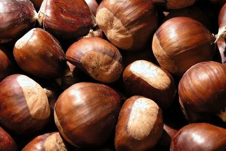 Castagne e marroni: differenze