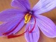 fiore di croco