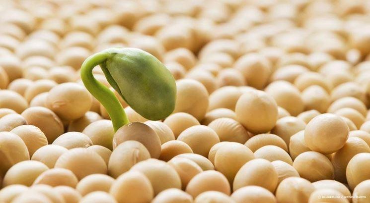 Proprieta soia