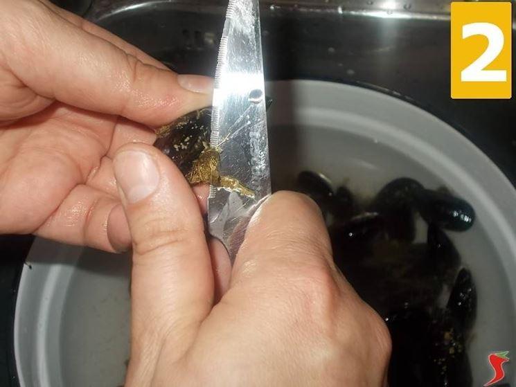 La prima pulizia delle cozze