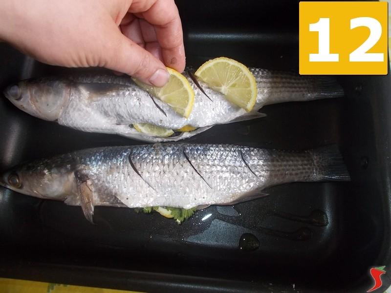 Un sacco di pesce nel mare che risale UK