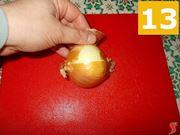 La cipolla