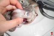 pulizia calamari