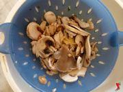 colare i funghi