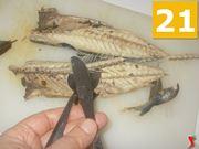 Spinare il pesce