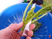 taglio le cime dei broccoli