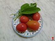 salvia e pomodori